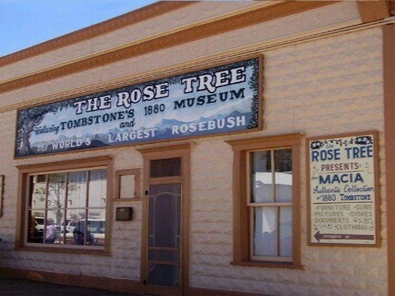 Rose-Tree-Museum1